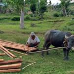 フィリピン報告1_水牛で資材