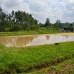 ティラピアやナマズの養殖池