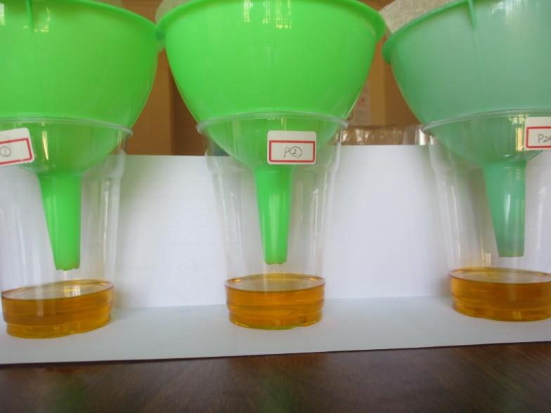 品質改善支援。オイルの搾り方を少しずつ変えながら、どの製造方法が一番良い品質のオイルを作れるかを実験調査